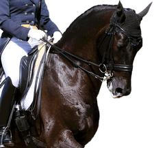equestrian website design in essex and uk